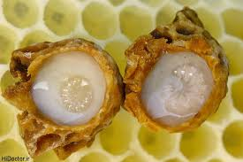 پرورش زنبور عسل در سه سوت
